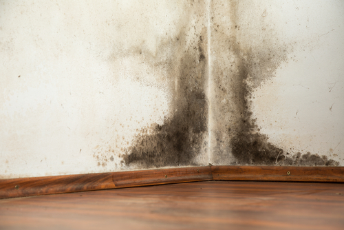 image of mold on drywall