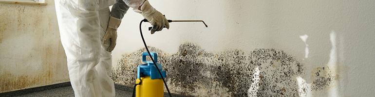 Mold Remediation Service Florida