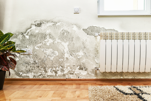 5 Most Common Causes of Household Mold