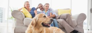 Easy Ways to Allergy-Proof Your Home