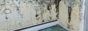 The Long Term Effects of Water Damage