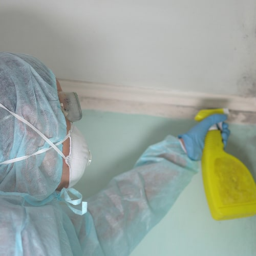 Mold Remediation & Repair Service Southwest Florida