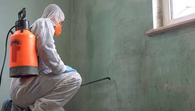 Mold Remediation and Restoration Service in Fort Myers FL