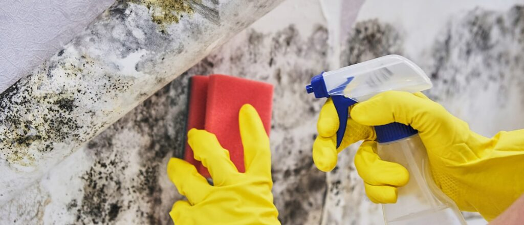 How To Remove Mold in 5 Easy Steps